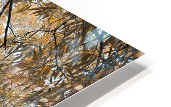Lumiere automnale 2 HD Sublimation Metal print