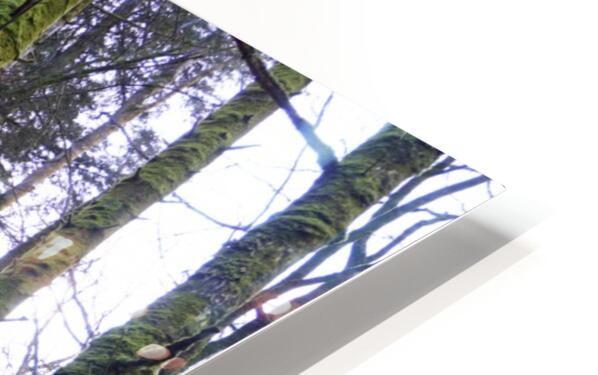 Trees of the Killarney National Park Co. kerry Ireland Europe 2018 HD Sublimation Metal print