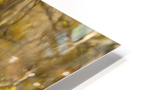 Autumnal swirls reflections HD Sublimation Metal print