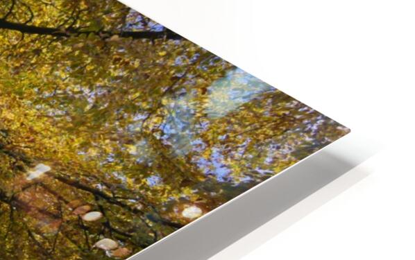 Autumn leaves and cut trees HD Sublimation Metal print