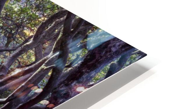 Tree lined Rhododendron walkway HD Sublimation Metal print