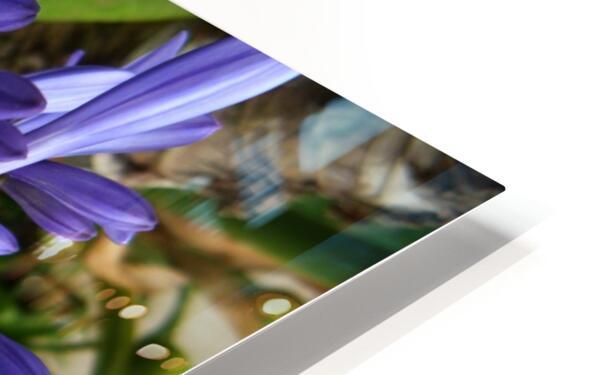 flower3 HD Sublimation Metal print