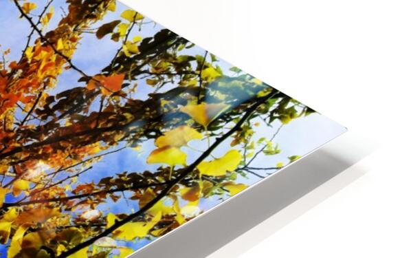 flower43 HD Sublimation Metal print