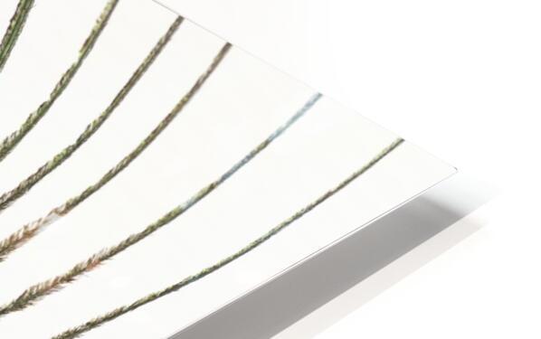 Peacock feather Impression de sublimation métal HD
