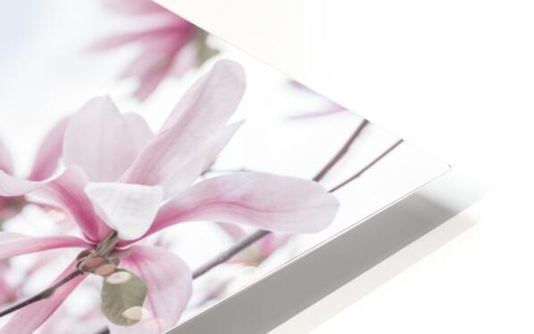 Magnolias against sky HD Sublimation Metal print