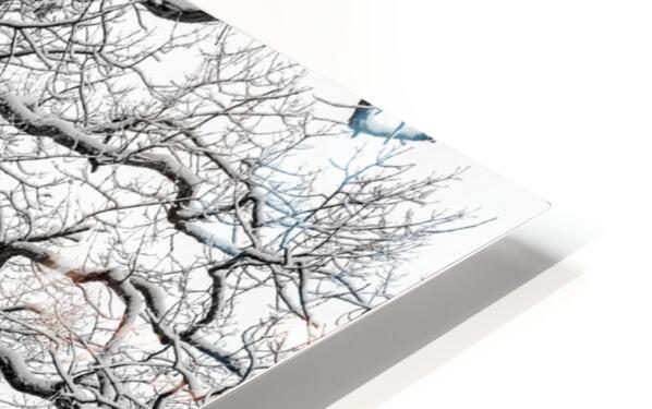 First Snowfall HD Sublimation Metal print