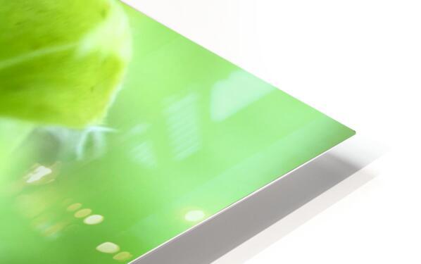 24_Green_Plant_6772_SQUARE HD Sublimation Metal print