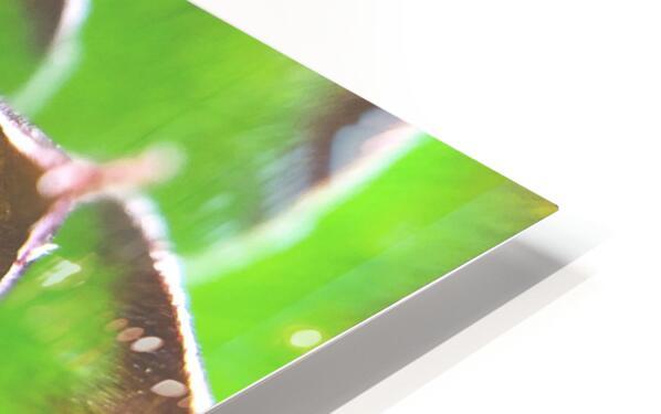 20_Green Succulent Perennial - Verte Vivace_9780_CLEAR SQUARE HD Sublimation Metal print