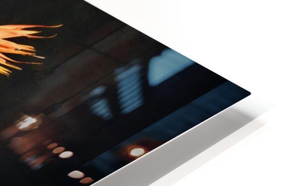 A vol doiseau HD Sublimation Metal print