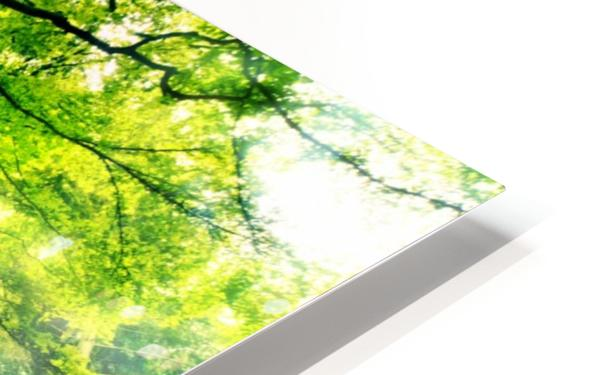 Ponthus Beech by Christophe Kiciak  HD Sublimation Metal print