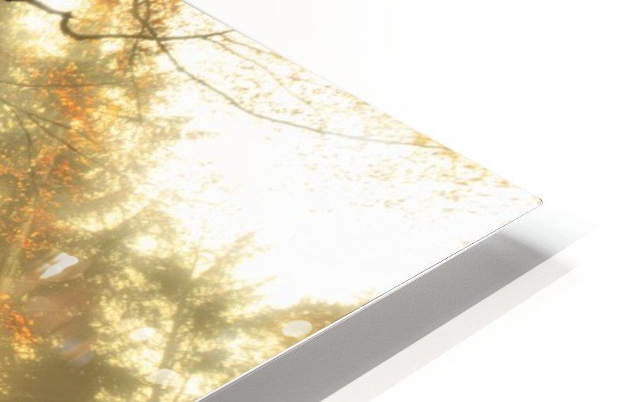 November by Christophe Kiciak  HD Sublimation Metal print