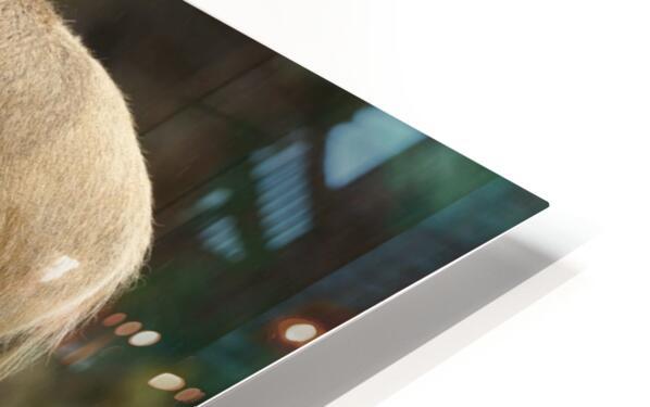 Reindeer HD Sublimation Metal print