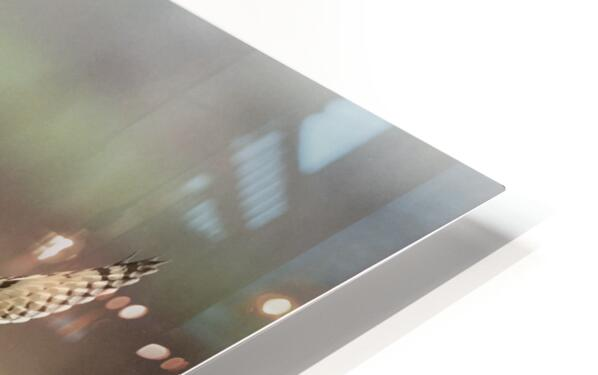Wesley Allen Shaw 02128 HD Sublimation Metal print