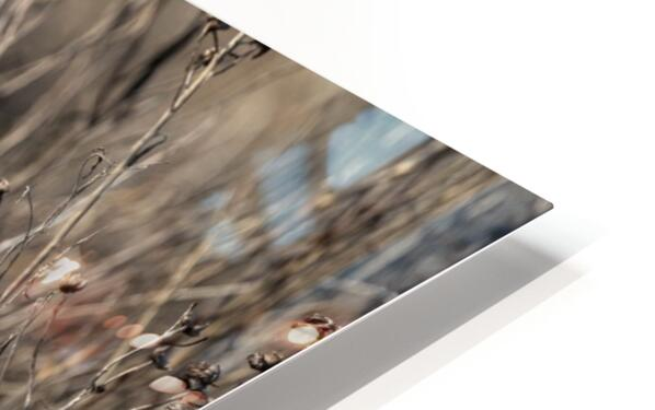 Wesley Allen Shaw 09496 HD Sublimation Metal print