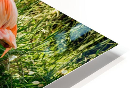 20201004 DSC 0252 HD Sublimation Metal print