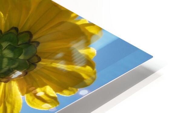 Summer Sky Flowers 8 AUG 2020 HD Sublimation Metal print