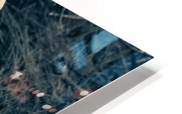 Great White Egret ap 1839 B&W HD Sublimation Metal print