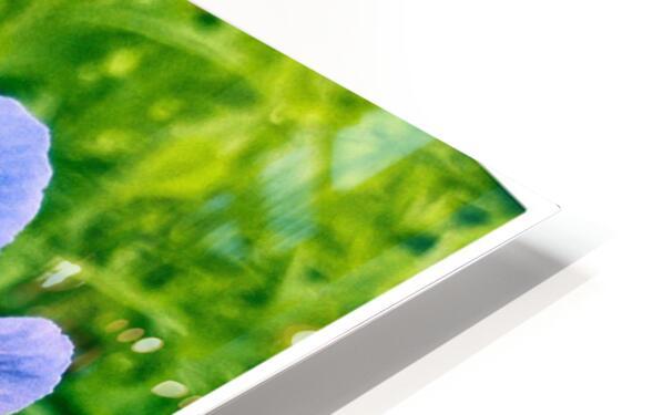 Periwinkle HD Sublimation Metal print