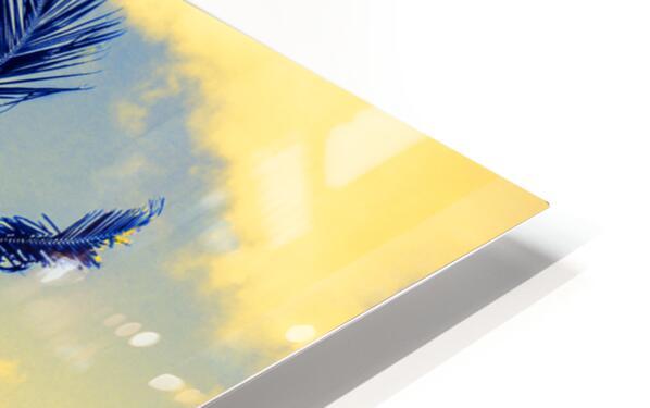 palm color 4 HD Sublimation Metal print