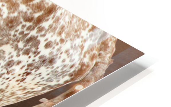 Longhorn Steer Profile 7x5 HD Sublimation Metal print