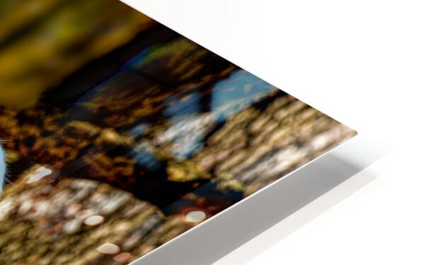 Fallow Deer 3 HD Sublimation Metal print