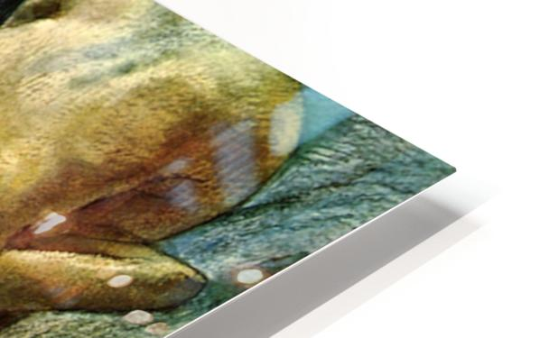 The Tub by Degas HD Sublimation Metal print