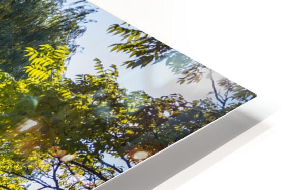 Drape of Trees HD Sublimation Metal print