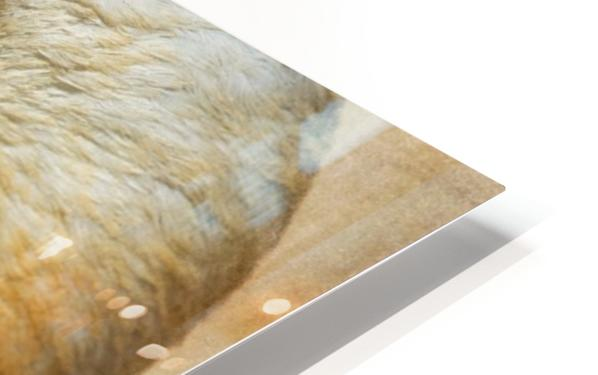Solace HD Sublimation Metal print