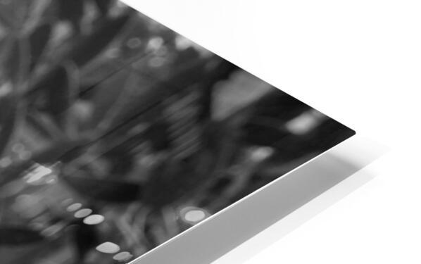 Desert in Black White HD Sublimation Metal print