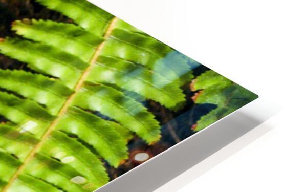 Soaking up Shade   Rattle Snake  HD Sublimation Metal print