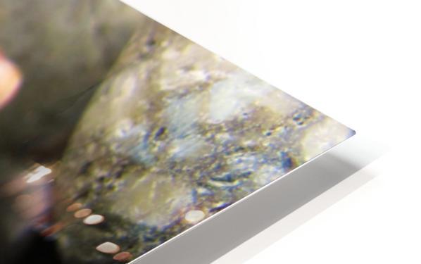 Sea Glass and Seashell HD Sublimation Metal print