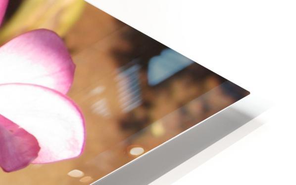 Pink Plumeria HD Sublimation Metal print