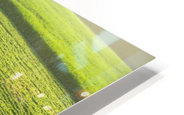 Portrait of a farmer walking through a large green soybean field in central Iowa in summer; Iowa, United States of America HD Sublimation Metal print