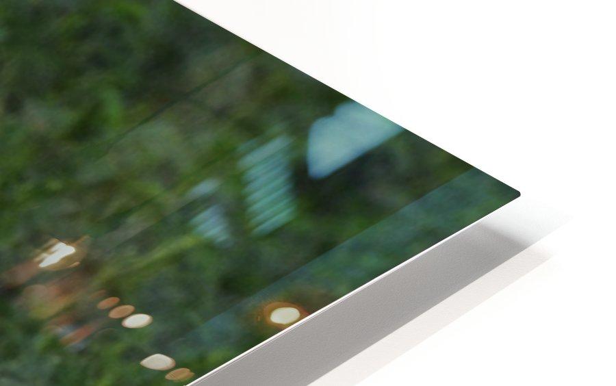 Cattle Egrets HD Sublimation Metal print