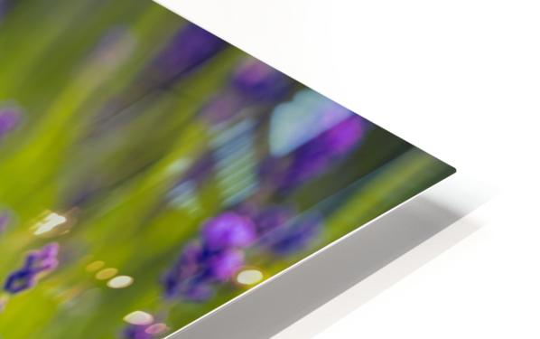 Beautiful Sunset lavender flowers HD Sublimation Metal print