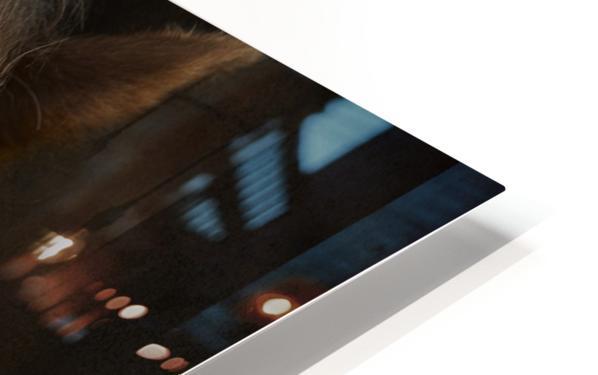 Sapience HD Sublimation Metal print