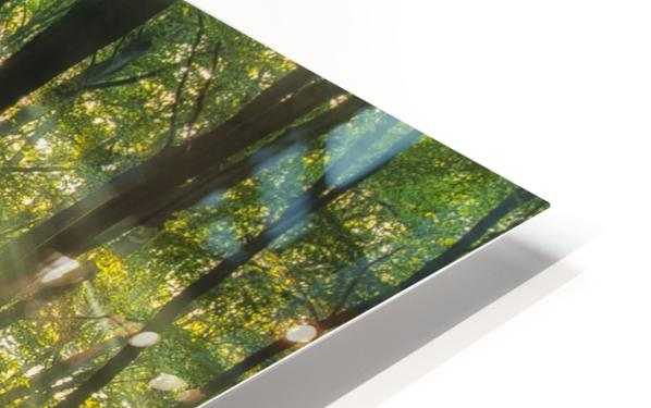 Sunny start to the day ........ HD Sublimation Metal print