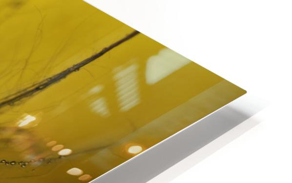 A golden morning shower HD Sublimation Metal print