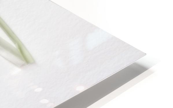 ART.ichoke - 2 HD Sublimation Metal print