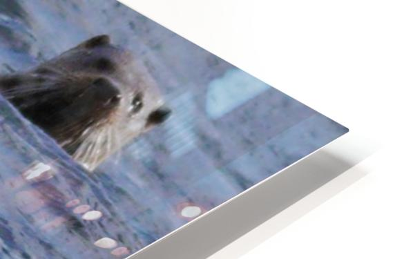 Watching Otter HD Sublimation Metal print