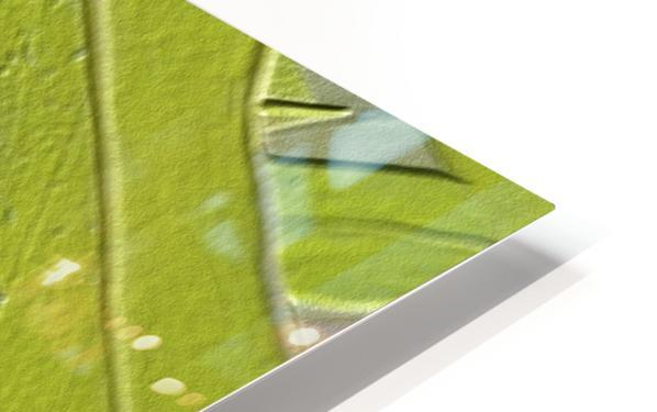 Leaf Texture Background HD Sublimation Metal print