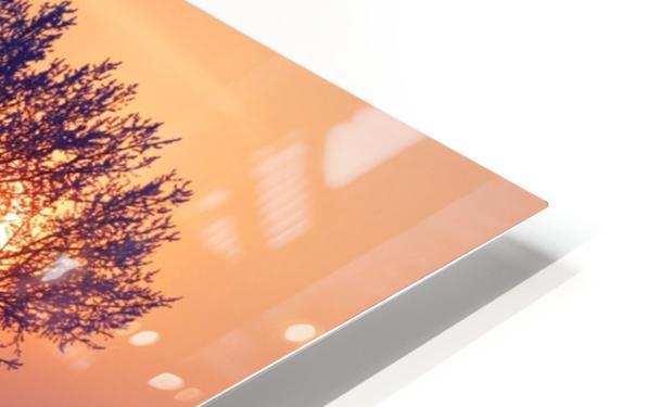 Sun Peeking Through Some Trees HD Sublimation Metal print