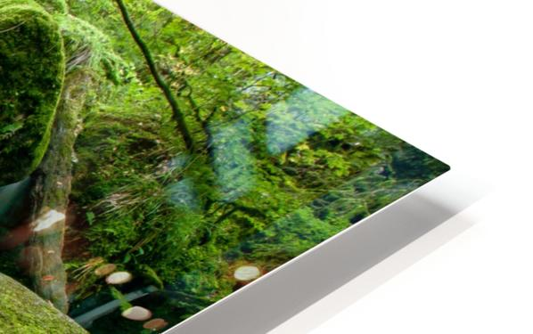 Small Waterfall in the German Black Forest HD Sublimation Metal print