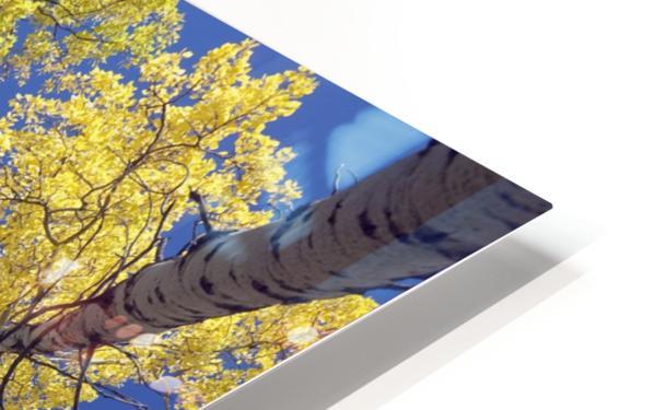Forest During Autumn, Kananaskis, Alberta, Canada HD Sublimation Metal print