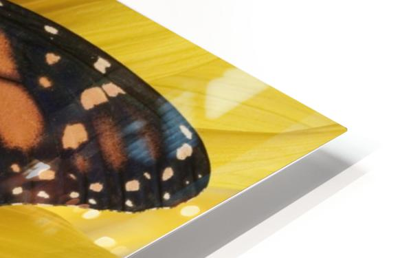 Monarch Butterfly On Sunflower. HD Sublimation Metal print