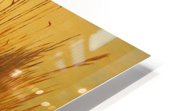 American Wigeon HD Sublimation Metal print