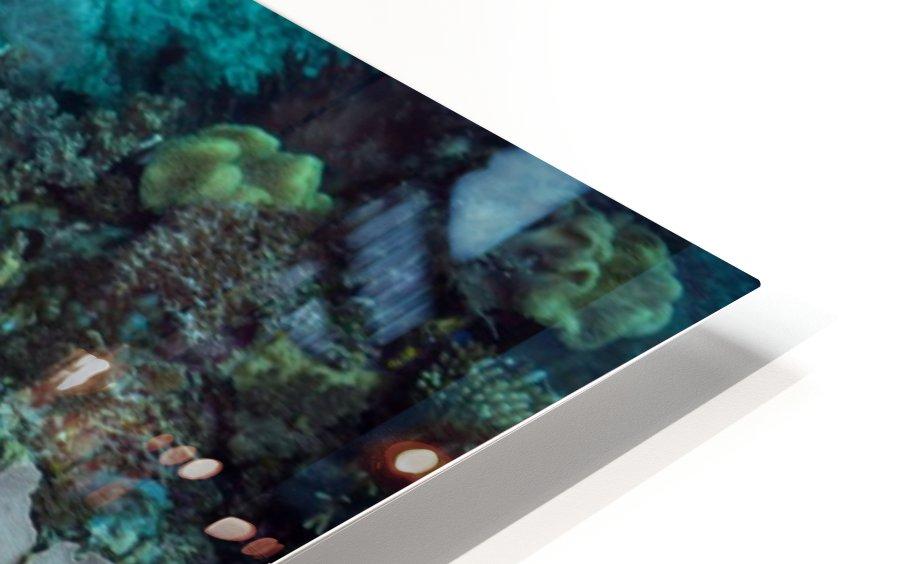 Clean turtle HD Sublimation Metal print