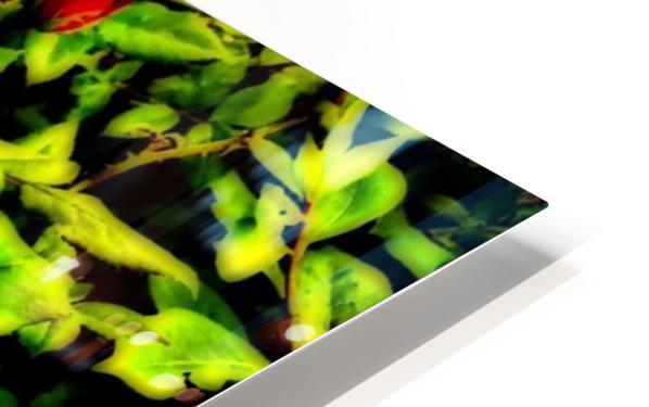 roselooking HD Sublimation Metal print