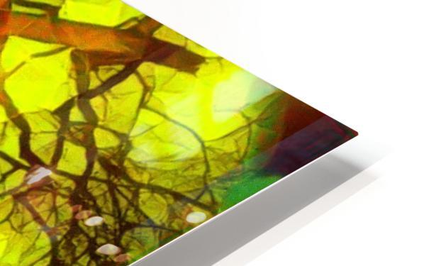 100yearoldtreeNUMBERtwo HD Sublimation Metal print