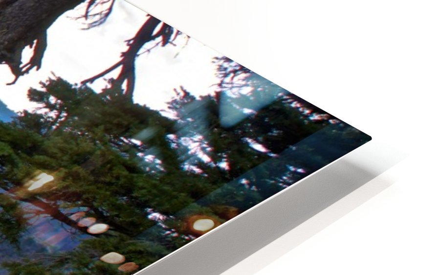 Gnarled White Pine overlooking Crater Lake Aug 2015 HD Sublimation Metal print